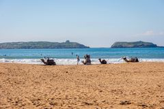 Essaouira strand med kamel Royaltyfria Bilder