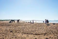 Essaouira strand med kamel Arkivfoto
