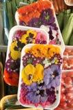 Essbare Blumen lizenzfreies stockbild