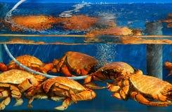 Essbare Meerestiere für Verkauf Lizenzfreies Stockbild