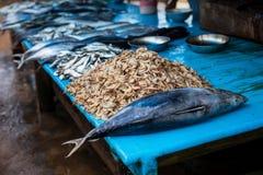 Essbare Meerestiere am Fischmarkt Stra?ennahrung, M?rkte speisend, Meeresfr?chte in Sri Lanka Thunfisch und Garnele lizenzfreies stockbild