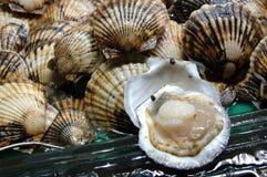 Essbare Meerestiere: Kamm-Muschel Stockfotos