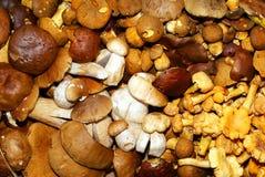 Essbare Pilze. Stockfotografie