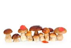 Essbare Pilze des Boletus Lizenzfreies Stockfoto