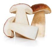 Essbare Pilze des Boletus lokalisiert Lizenzfreie Stockfotos