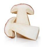 Essbare Pilze des Boletus lokalisiert Lizenzfreies Stockfoto