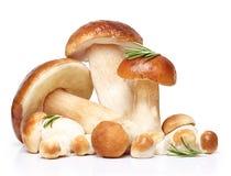 Essbare Pilze des Boletus lokalisiert Lizenzfreies Stockbild