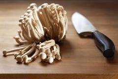 Essbare shimei Pilze in der Küche stockfotografie