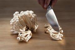 Essbare shimei Pilze in der Küche lizenzfreie stockfotografie