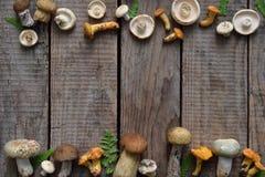 Essbare wilde Pilzgrenze, Boletus, russule, Pfifferlinge auf dem hölzernen Hintergrund Stockbilder