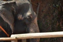 Esse com o elefante Fotografia de Stock Royalty Free