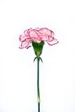 Esse para o amor. Imagem de Stock Royalty Free