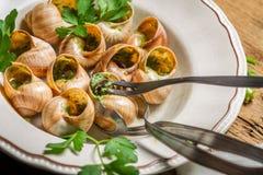 Essen der gebratenen Schnecken mit Knoblauchbutter Stockfotografie