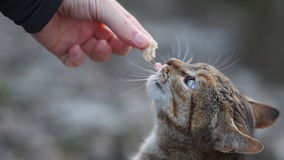 Essen der Katze lizenzfreies stockbild