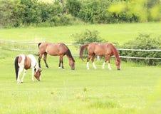 Essen der Pferde stockfotografie