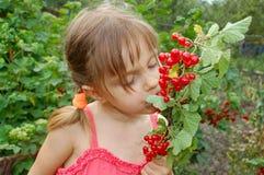 Essen der roten Johannisbeere Stockfotografie