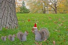 Essen des Eichhörnchens, das den roten Weihnachtshut sitzt auf dem Gras trägt Lizenzfreies Stockbild