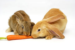 Essen des Kaninchens Stockfotos