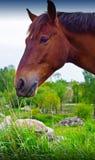 Essen des Pferds Lizenzfreie Stockfotos