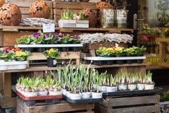 ESSEN, DEUTSCHLAND - 25. JANUAR 2017: ein Blumenspeicher bietet verschiedene Arten von Blumenzwiebeln an, die freundlich vor dem  Lizenzfreie Stockfotos