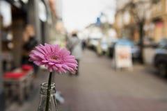ESSEN, DEUTSCHLAND - 25. JANUAR 2017: Lokalisierte rosafarbene Blume, die ein Teil des Tischschmuck ofa Cafés im Freien bei Ruett Stockbilder
