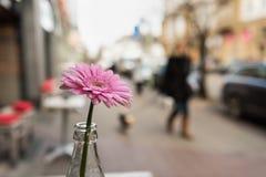 ESSEN, DEUTSCHLAND - 25. JANUAR 2017: Lokalisierte rosafarbene Blume, die ein Teil des Tischschmuck ofa Cafés im Freien bei Ruett Lizenzfreie Stockfotos