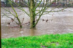 Tree in the middle of the flood. ESSEN, NRW, GERMANY - FEBRUARY 04, 2016: Tree in the middle of the flood in the river the Ruhr near the city Essen Werden by stock image