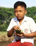 Essen Sie auf dem Reisgebiet Stockfotos