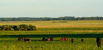 Essen von Pferden auf dem Gebiet Stockfotos