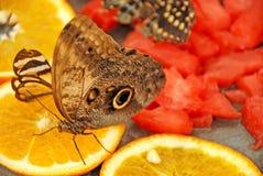 Essen von Schmetterlingen Lizenzfreies Stockfoto