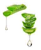 Essence from aloe vera plant drips from the leaves. On white background Stock Photo
