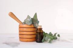 Essence d'eucalyptus photo stock