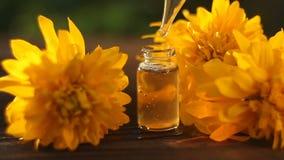 Essence des fleurs de coneflowers sur la table dans la belle bouteille en verre banque de vidéos