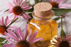 Essence of Echinacea purpurea macro in a glass bottle Royalty Free Stock Images