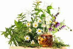 Essence with medical plants and fresh herbs Stock Photo