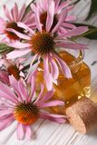 Essence purple coneflower close up in a bottle. vertical Royalty Free Stock Image