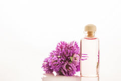 Essence of red clover flowers  Stock Image