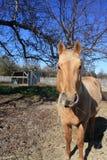 Essendes Pferd he Lizenzfreies Stockbild