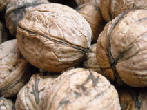 ESSENnuß Walnussrumpf-Beschaffenheit macrophoto des Nuts Naturlebensmittelherbstes Makro Lizenzfreie Stockfotografie