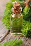 Essential aromatic oil spruce closeup vertical Stock Image