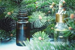Essential coniferous oil in a dark bottle, a bottle of extract, pine branches royalty free stock photography