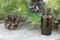 Essential coniferous oil in a dark bottle, a bottle of extract, pine branches stock images