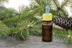 Essential coniferous oil in a dark bottle, a bottle of extract, pine branches stock image