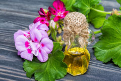 Essential geranium oil. In bottle and geranium flowers royalty free stock image