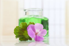 Essential geranium oil in bottle and  flowers Royalty Free Stock Images