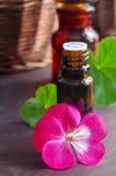 Essential geranium oil Royalty Free Stock Photos