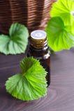 Essential geranium oil Stock Images