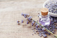 Essential lavender oil and dry lavender flowers. Royalty Free Stock Photos