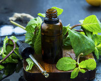 Essential mint oil in brown glass bottle with dropper, herbal me Royalty Free Stock Photography