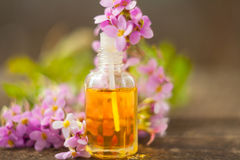 Essential oil of Arabis flower on a table in beautiful bottle Royalty Free Stock Images